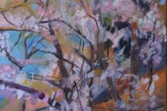 Sakura 2, Acrylics  on Canvas